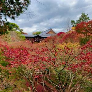 紅葉の名所「東福寺通天橋」とセットで周遊できる観光コースと名所