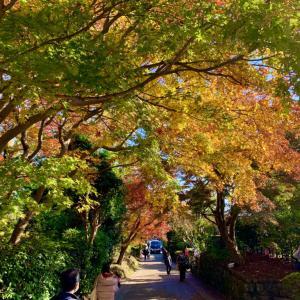 【京都・常寂光寺】絶景紅葉の写真