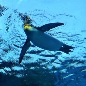 ペンギンは空を飛びたい。