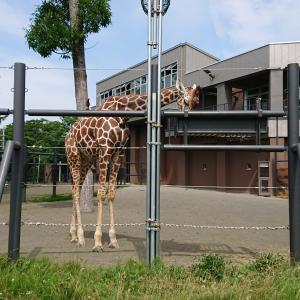 娘を連れて札幌円山動物園へ行きました