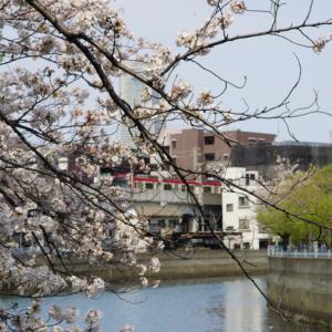 2020年大岡川桜並木を歩く