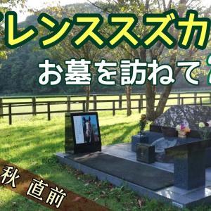 【追悼】サイレンススズカのお墓を訪ねて2020【天皇賞・秋】