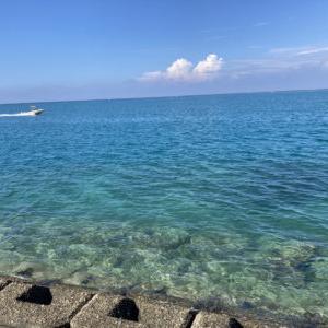 今朝は穏やかな海だったが・・