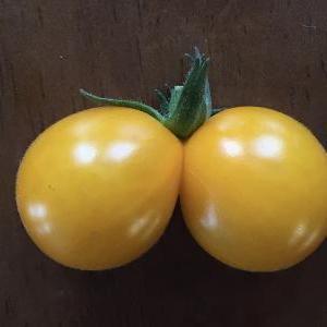 ミニトマトだって‥