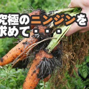 【南九州食材の旅~西山ファミリー農園~】ニンジン嫌いが作るニンジンは果物にも負けない甘さ!