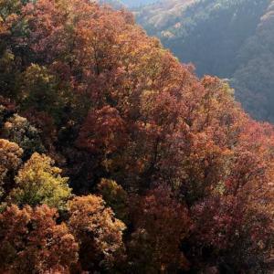 群馬県・黒瀧山 [19/11/17] ~スリルある岩峰、奇岩・怪石と抜群の展望、山岳信仰の山~