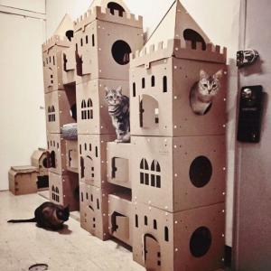外国人「猫のために本気を出してダンボール城を作ってみた!」
