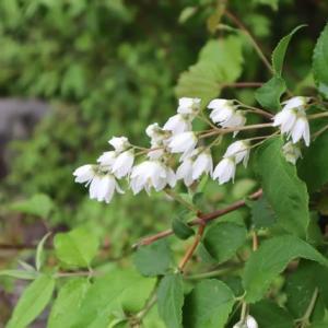 ウエルキャンプ西丹沢の植物