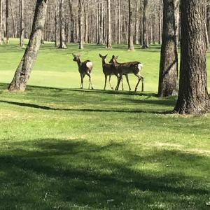 北海道のゴルフ場にはこんなギャラリーも?!