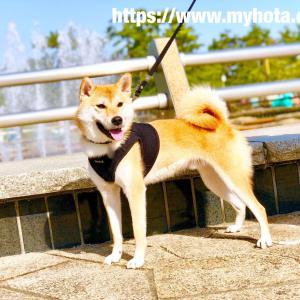 春がやってきた!ぽかぽか陽気の浜寺公園で、ほたかの笑顔は満開です