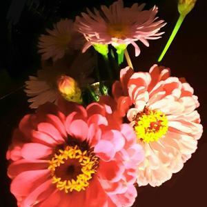7月のお花