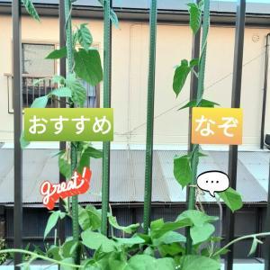 福袋な鉢植え
