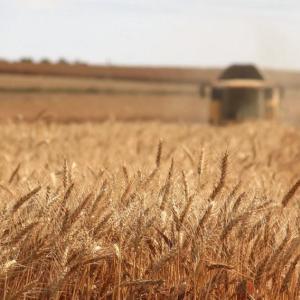 上手に使い分けよう!オーストラリアの小麦粉