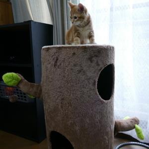 急遽、猫よけグッズ購入す