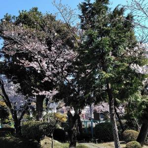 桜が満開と思ったら……