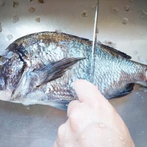 魚のうろこの取り方はこれ!おすすめ5選を紹介!