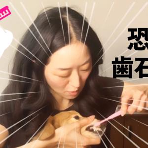 歯磨き嫌いなシニア犬の歯石取りにチャレンジ