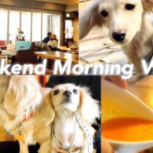 愛犬ダックス娘たちと幸せな週末の過ごし方