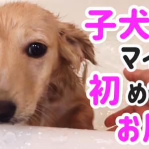 子犬初めてのお風呂