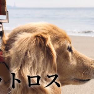 シニア犬を持つ飼い主としてペットロスについて思う事
