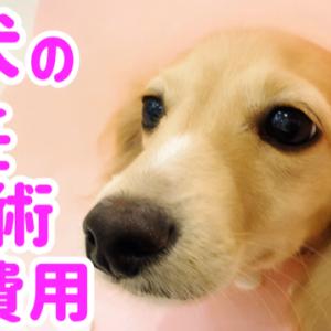 犬の避妊手術費用