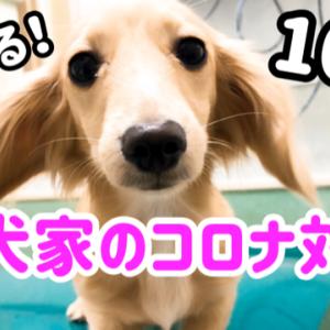 愛犬家のコロナ対策10個