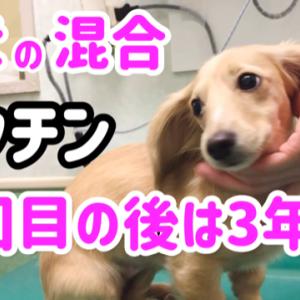 子犬の混合ワクチン4回目の後は3年後