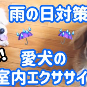 【雨の日対策】室内で出来る犬の簡単エクササイズ6つ