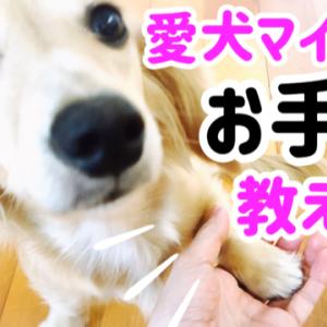 愛犬にお手を教える【しつけ】