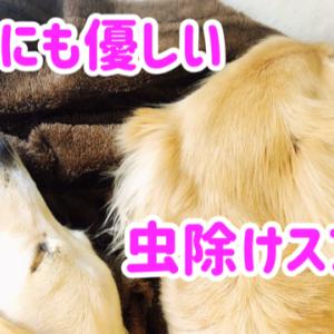 愛犬も使える優しい虫除けスプレーレビュー