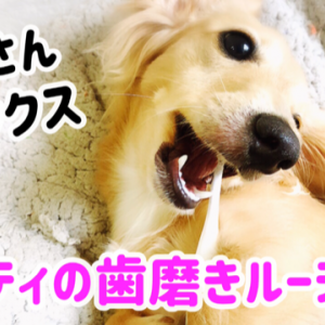子犬マイティの歯磨きルーティン