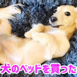 愛犬のベッドを新しくしたのに、意外な反応