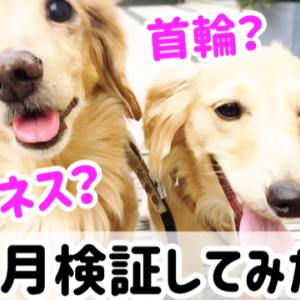 犬の首輪とハーネス、どっち?1ヶ月の検証結果
