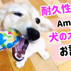 アマゾンで人気の耐久性ある犬のオモチャお試し!