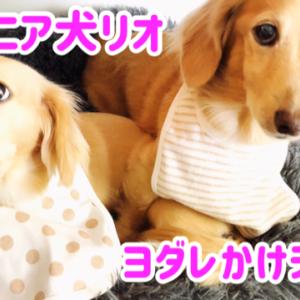 シニア犬リオの為にヨダレかけを買いました