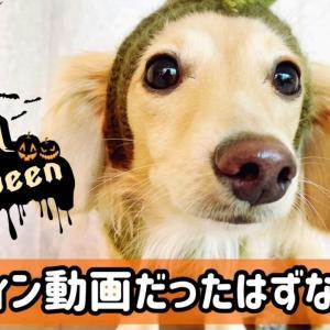 愛犬のハロウィン動画だったはずなのに