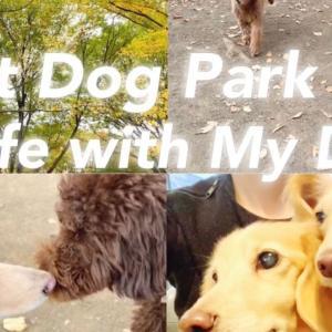 初めての代々木公園ドッグラン&愛犬と一緒に行けるオススメカフェ