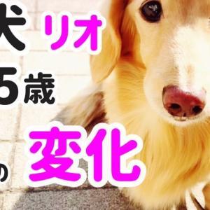 老犬15歳リオの変化7つ