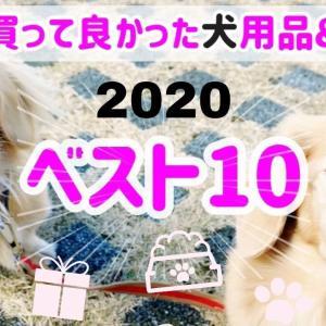 本当に買って良かった犬用品&サービス2020年ベスト10