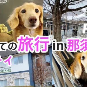 愛犬と旅行 おすすめ!