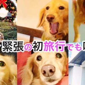 愛犬と旅行 おすすめ! 【後編】