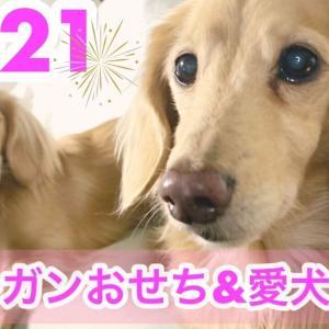 初ヴィーガンおせちを食べながら愛犬リオ&マイティが新年の抱負を考える2021年