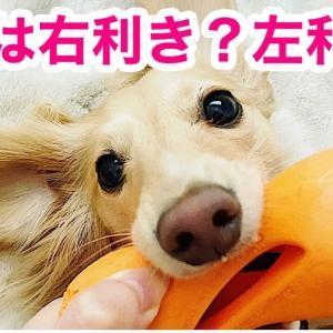 あなたの愛犬は右利き?左利き?
