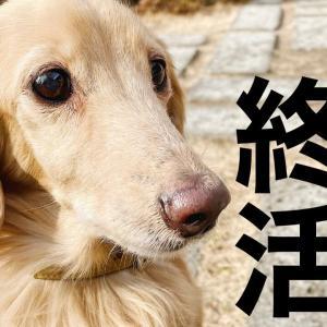 【愛犬の終活】どんな治療を望む飼い主になる?