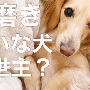【歯磨き嫌いな犬】救世主?ぴたポイをお試し