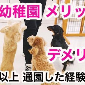 犬の幼稚園メリット&デメリット