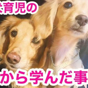 【犬 多頭飼い】先住犬育児の反省から学んだ事