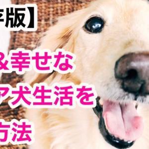 【保存版】快適なシニア犬生活を送る方法