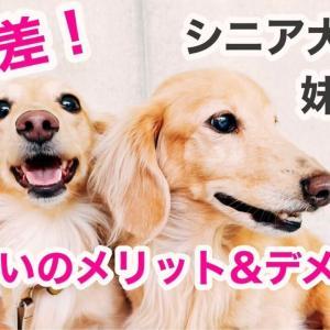 【年の差】多頭飼いのメリット&デメリット シニア犬の先住犬と子犬