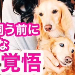 犬を飼う前に必要な覚悟